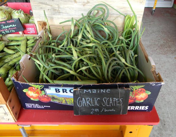 Portland garlic scapes II