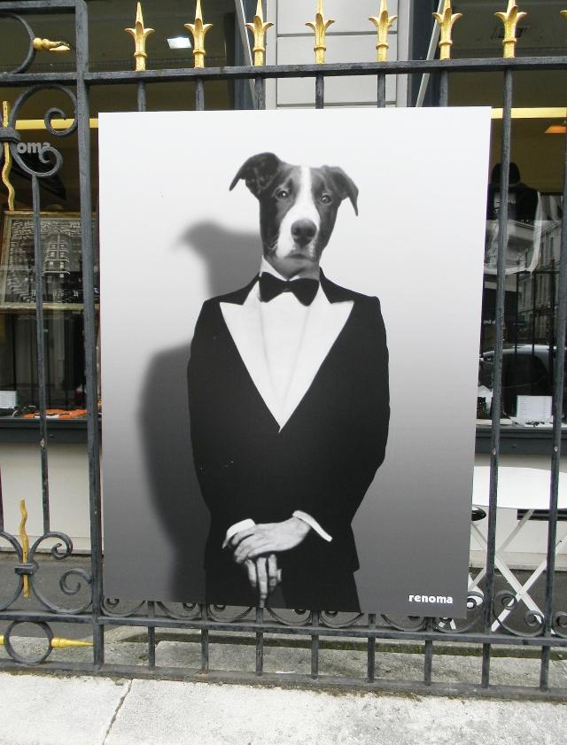 Renoma dog