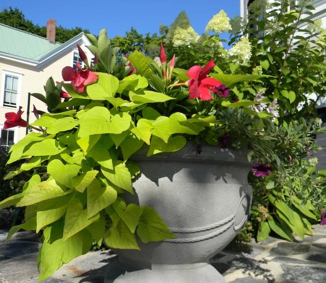 Hill flora